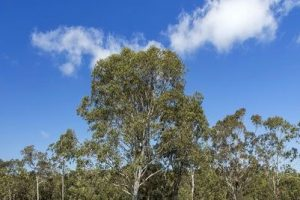 sunshine acreas - Hervey Bay - rural area with trees, grass & shrubbery
